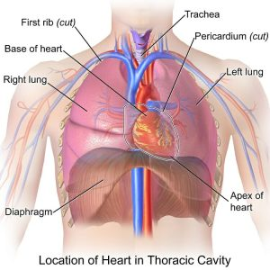 thoracic cavity injury